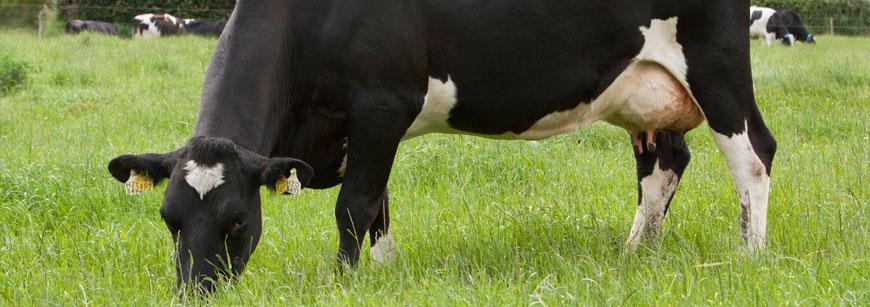 Lakeland Dairies congratulates award-winning farmers