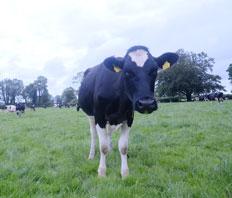 WATCH: Lakeland Dairies on Reducing Chlorates in milk