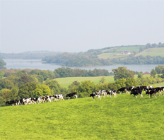 Lakeland Dairies Chief Executive welcomes new Website